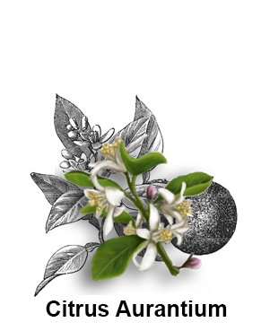 Citrus Aurantium